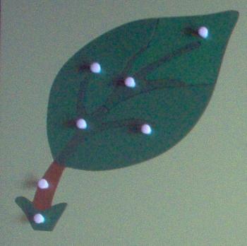Botany - Montessori Parts of the Leaf Puzzle
